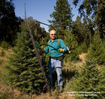 Forestry & Christmas Trees - Foothill Farming