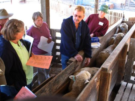 Participants worked in teams and each teams received a flock of fifty yearling e