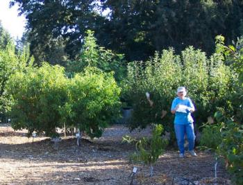 FOHC orchard big view-1