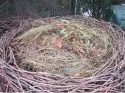 Building the Bird Nest