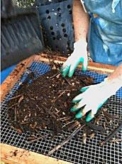 Sifting compost through wire mesh sifter