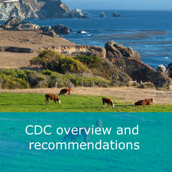 CDC overview and recommendations