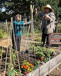 Master Gardeners Susan Shaw and Kathy Matonak construct teepees for vertical gardening, by Electra de Peyster