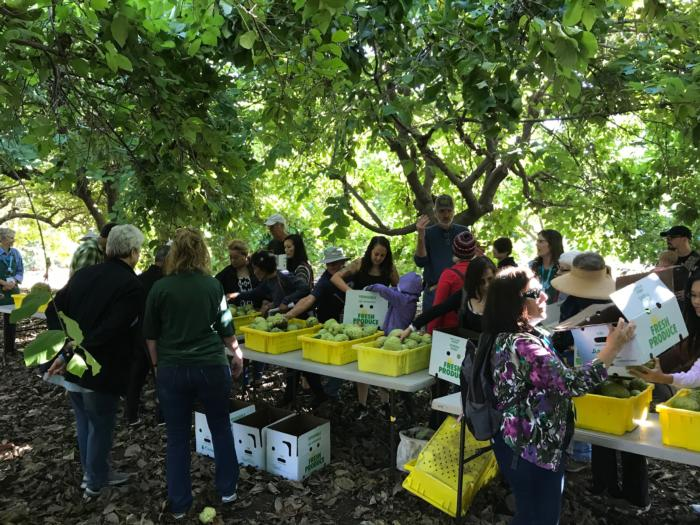 Cherimoya Field Day