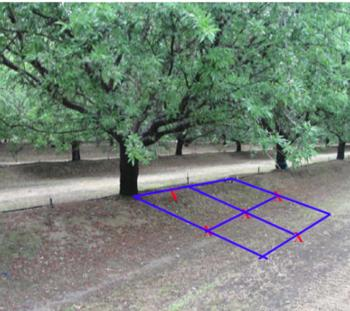Layout of sampling points in a fanjet irrigated almond orchard (USDA collaboration)