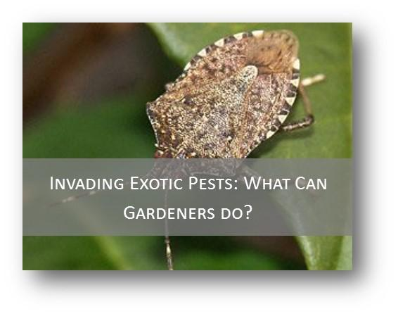 Invading Pests