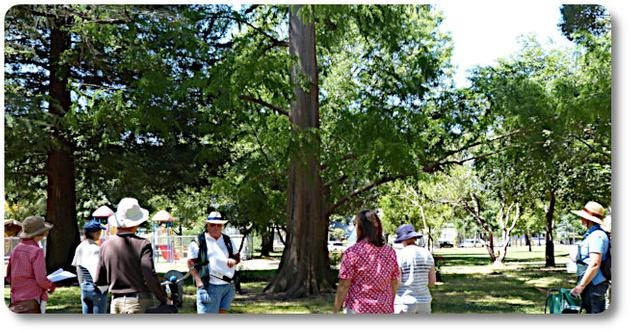 Guided Tree Walk Tour