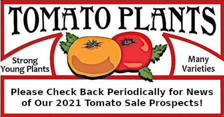 See You at the 2021 Tomato Sale!