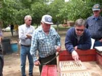 Fig. 10. Growers inspect nuts during field trial.