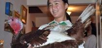 turkey for 4-H in the Media Blog