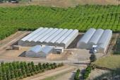 Lindcove REC maintains more than 300 different citrus selections and provides budwood to California nurserymen and growers at a minimal cost.