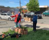 Haley Kerr, left, and Yolanda Silva of CalFresh Healthy Living, UC, gave away tomato plants donated by UC Master Gardeners of Contra Costa County to families of schoolchildren in Alameda County. The joint project is mentioned in the May UCnetwork.