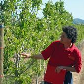 Rachel Elkins examines a pear rootstock trial in 2007.
