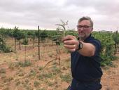 John Roncoroni examines silver leaf nightshade that he found in a vineyard.