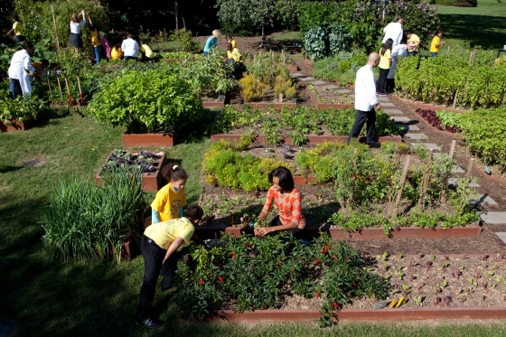 Michelle Obama works in the White House kitchen garden. (White House photo.)