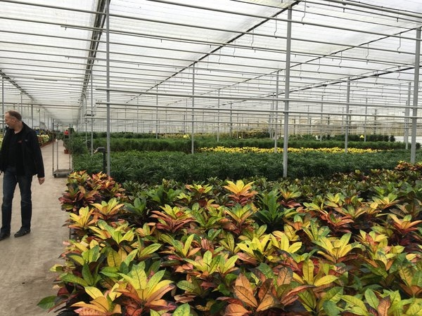 Dutch scientists are trying to achieve carbon neutrality in greenhouse production.