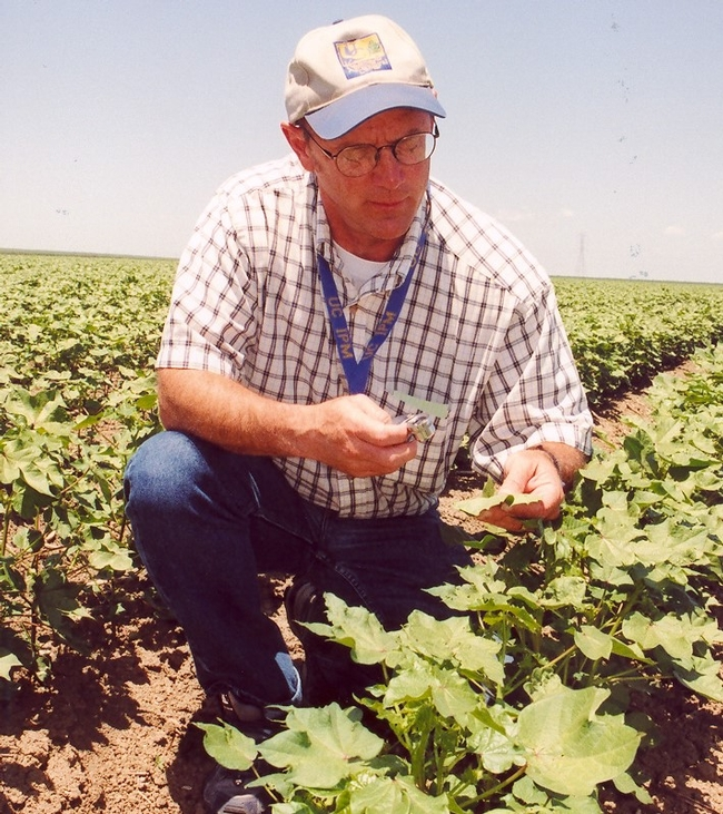 Retiring UC IPM entomologist Pete Goodell in a cotton field.