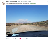 While most news media attention was focused on Northern California fires, Niamh Quinn, who tweets as SoCal Urban Wildlife, had to flee wildfire in Orange County.
