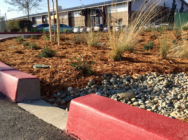 Rain water will run off the parking lot surface into rain garden swales.