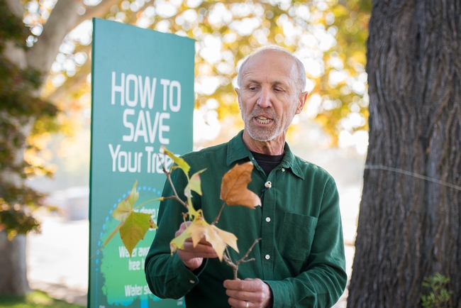 During the drought, Ingels advised homeowners on how to save their landscape trees.