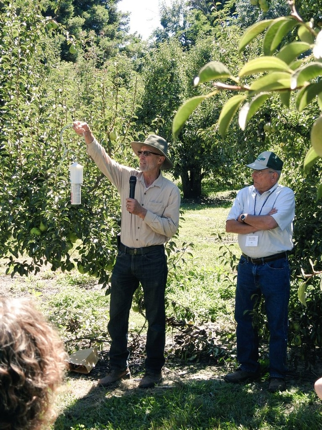 Ingels explained codling moth mating disruption in a pear orchard during a specialty crop tour. Photo by Petr Kosina