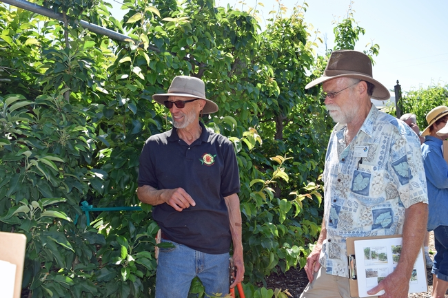 Chuck Ingels presented a workshop on espalier training for fruit trees at Fair Oaks Horticulture Center in May 2018. Photo by Pam Bone