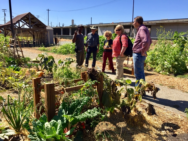 UCCE Master Gardeners and 4-H members partner with City Slicker Farms, teaching people how to grow food in West Oakland.