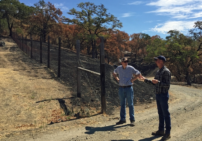 John Bailey, right, shows Mark Lagrimini the difference in fire damage to grazed pasture on the left side of the fence and the ungrazed areas at Hopland REC.