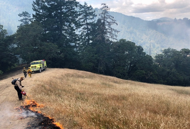 A Mendocino County Fire Safe Council member sets a prescribed burn during a UC ANR fire retreat. Photo by Lenya Quinn-Davidson