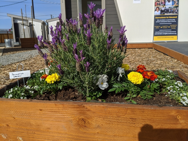 Master Gardeners in Santa Clara County landscaped tiny homes for the homeless.