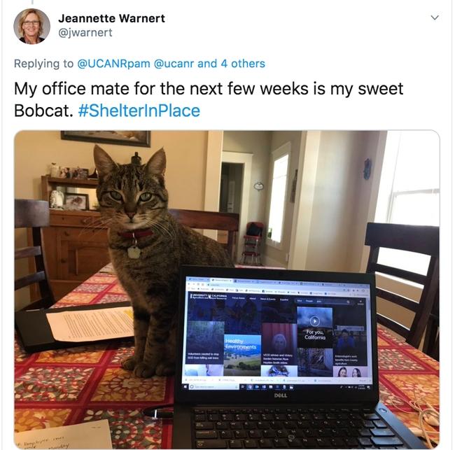Jeannette Warnert's office mate Bobcat