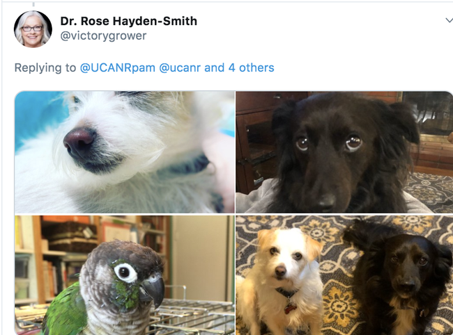 Rose Hayden-Smith has a diverse home office staff.