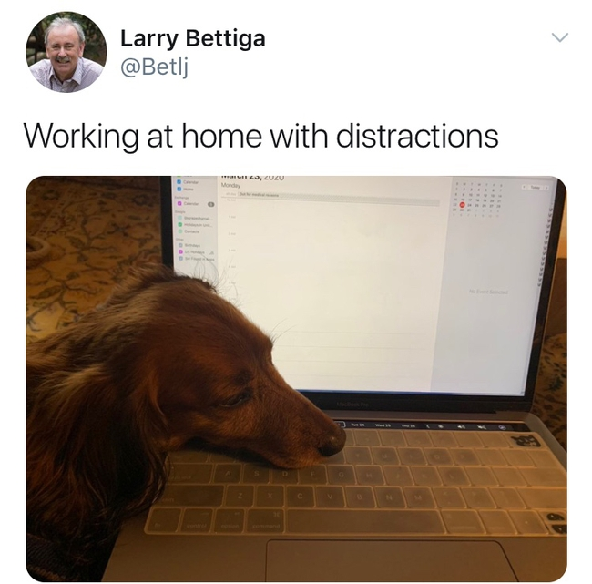 Larry Bettiga gets some laptop help from his lap dog.