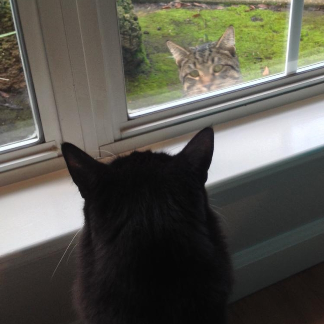Lorna Krkich's Kitty Bubka demonstrates social distancing from neighbor Brewer.