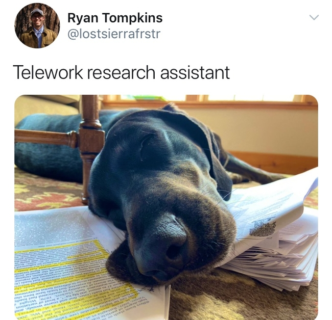 Ryan Tompkin's forestry research assistant.