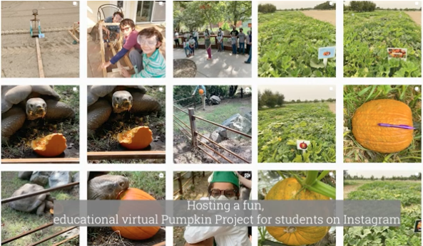 Kearney Agricultural Research and Extension Center hosted a virtual pumpkin-growing contest for 4-H members in Fresno County.