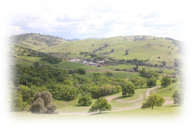 SFREC Landscape