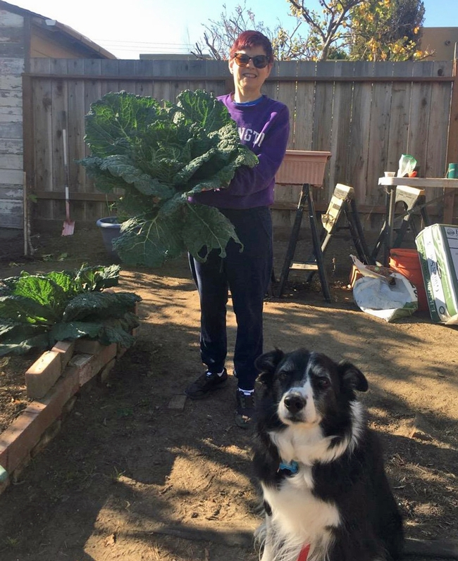 Elaine Silver's dog helped her grow cabbage.