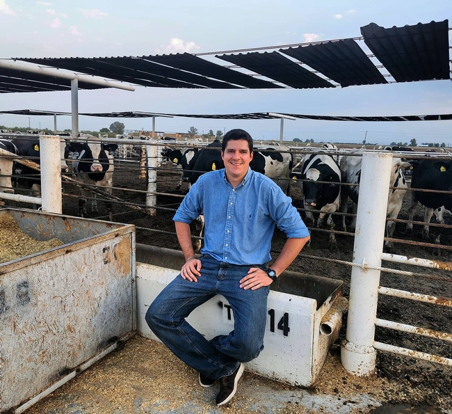 Pedro Carvalho sits outside Desert REC feedlot pen with black & white cattle looking at him.