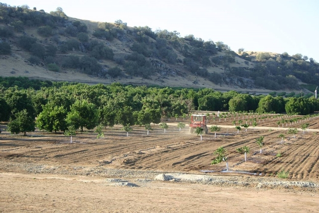 Lindcove Research & Extension Center, located in the foothills of Tulare County, has land, labor and facilities available for 2021-22 research projects.