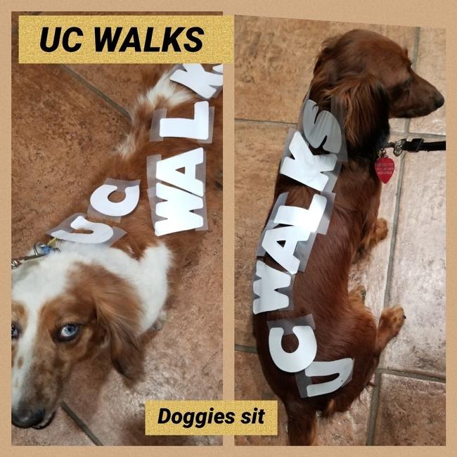 Elia Escalante's dogs won the UC ANR Walks photo contest for fashion.