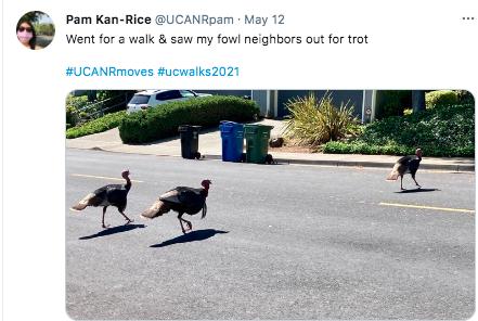 Pam Kan-Rice won a social media award for this turkey tweet.