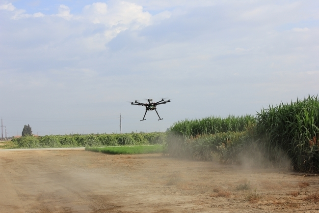 Drone flies over sorghum at Kearney Agricultural Research and Extension Center.