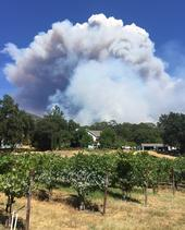 This was the view of the River Fire consuming the upper pastures of Hopland REC on Friday from Glenn McGourty's home.