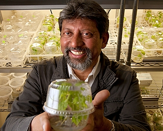 Plant scientist Abhaya Dandekar holds a grape seedling that is enclosed in a clear plastic container.