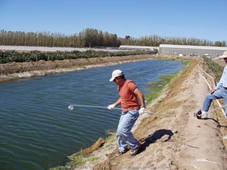 A man holding a 6-foot pole pulls water samples from an irrigation canal while another man observes.