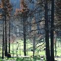Tahoe fire