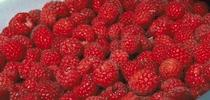 Production costs for raspberries and other crops are available. for ANR news releases Blog