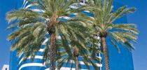 """Biology and Management of Landscape Palms"" for ANR news releases Blog"