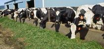 The new Farm Bill will affect the dairy industry and all California commodities. for ANR news releases Blog